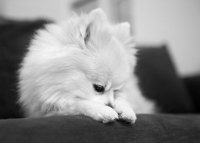 DHP_butters_knox_1133_RS_bw_a