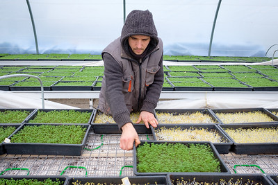 Le Paysan Urbain est une micro ferme urbaine aux portes de Paris. Ils cultivent de saines et savoureuses micro-pousses selon un modèle respectueux de l'environnement et créateur d'emplois pour des personnes en difficulté.