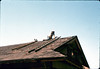 """Charlie"" stripping roof, 6/1982. acc2005.001.0224"