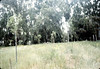 Pepper trees planted as screen between Goleta Depot and Stow House, 6/1983. acc2005.001.0360