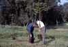 Arbor Day tree planting (Gene Allen and Ralph Moore), 3/1986. acc2005.001.0544