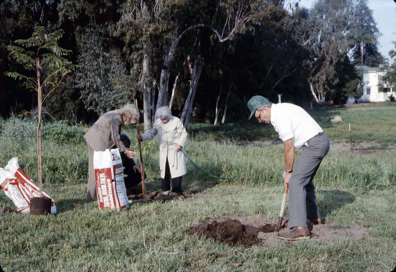 Arbor Day tree planting (Little Gardens Club), 3/1986. acc2005.001.0556