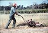 Al Jaramillo cutting weeds, Spring 1987. acc2005.001.0763