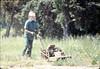 Al Jaramillo cutting weeds, Spring 1987. acc2005.001.0762