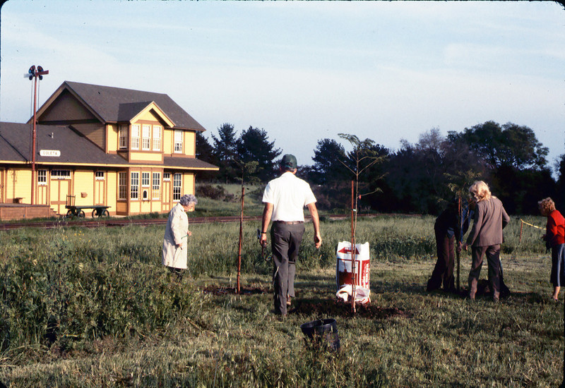 Arbor Day tree planting (Little Gardens Club), 3/1986. acc2005.001.0559