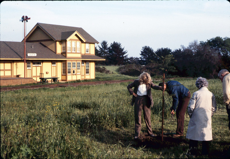 Arbor Day tree planting (Little Gardens Club), 3/1986. acc2005.001.0558