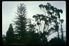 Stow House specimen trees, 1991. acc2005.001.1587