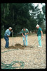 Tree is planted (Goleta Beautiful) in memory of the museum's late benefactor, Earl Hill, 1992. acc2005.001.1630
