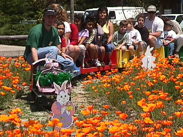 "For this ""Easter Bunny Express"" event at the railroad museum, the grounds were ablaze with golden California Poppies.  If this photo is your favorite, click on the ""ADD COMMENT"" button at the lower left to tell us why you like this particular photo. Please include your name and contact information (Parental approval is required if you are under age 18)."
