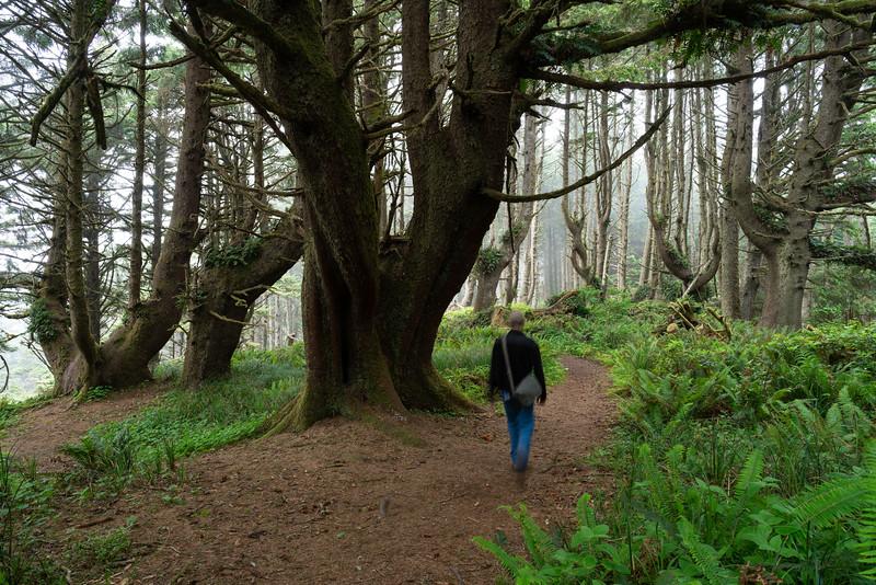 Trail to Hobbit Beach