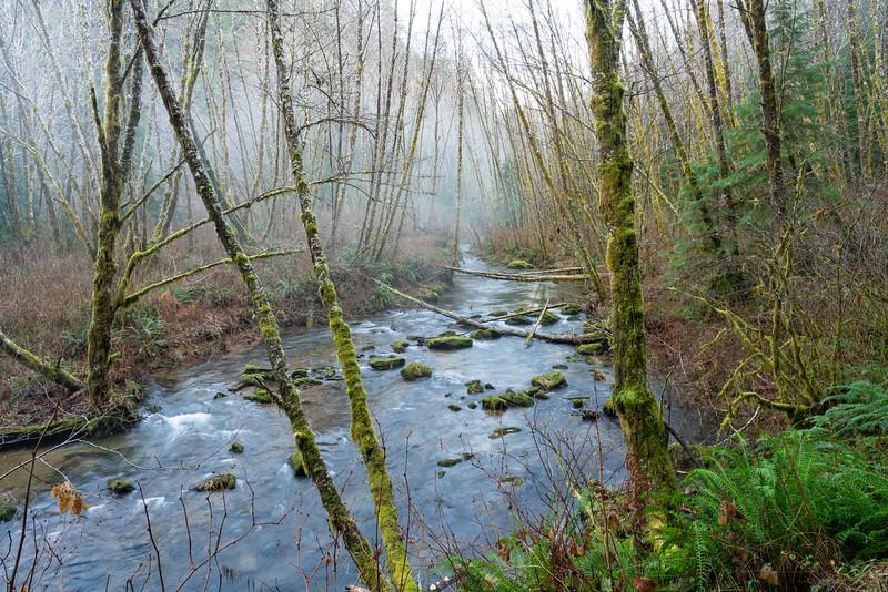 Sweet Creek Falls Trail