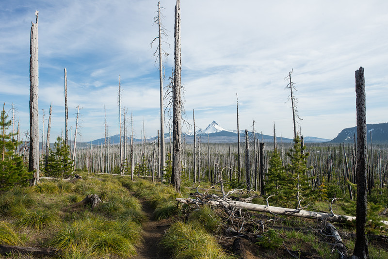 Pacific Crest Trail, OR