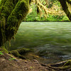 McKenzie River Trail, OR