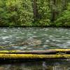 McKenzie River Trail, OR