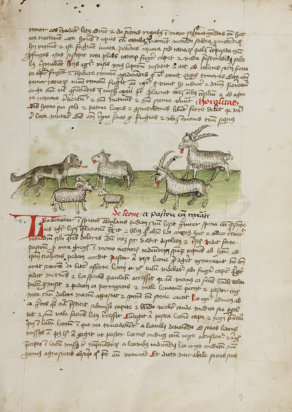 A Dog, Sheep, and Rams