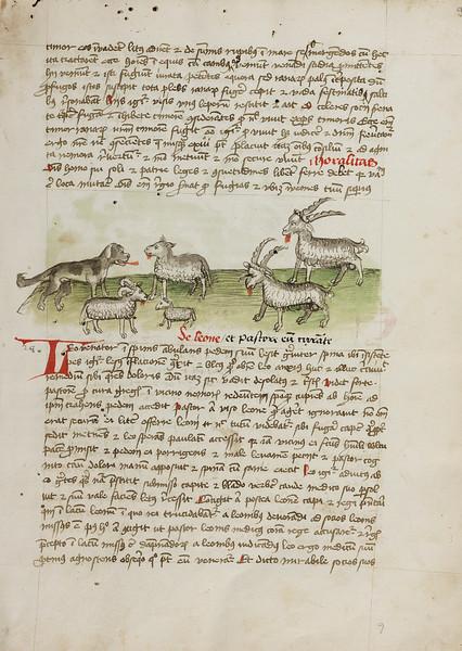 A Dog, Sheep, and Rams