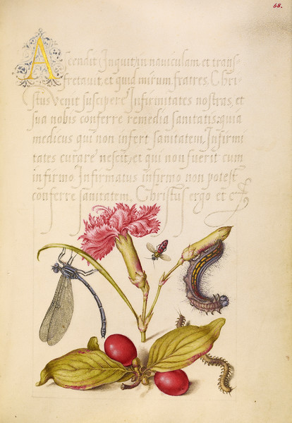 Damselfly, Carnation, Firebug, Caterpillar, Carnelian Cherry, and Centipede