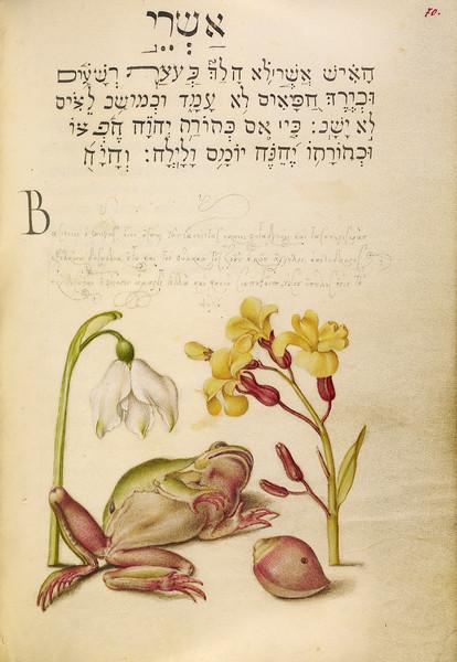 Spring Snowflake, Tree Frog, Wallflower, and Marine Mollusk