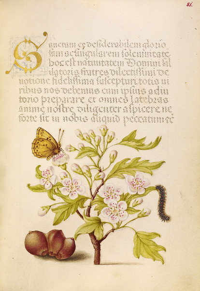 Insect, English Hawthorn, Caterpillar, and European Filbert