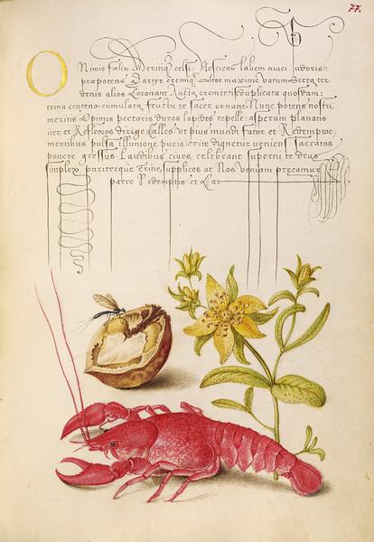 Insect, English Walnut, Saint John's Wort, and Crayfish