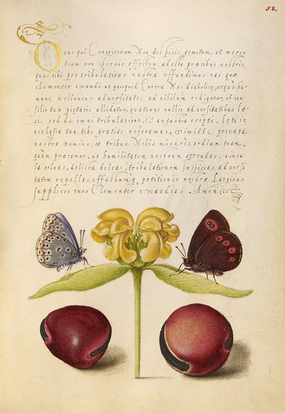 Moths, Jerusalem Sage, and Beans