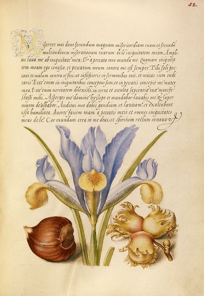 Spanish Chestnut, English Iris, and European Filbert