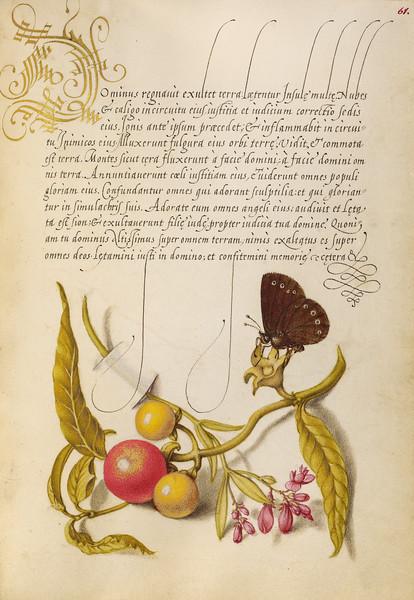 Ringlet, False Jerusalem Cherry, and Milkwort