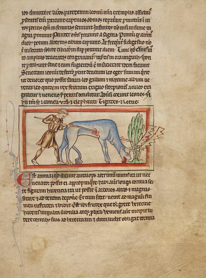 An Antelope