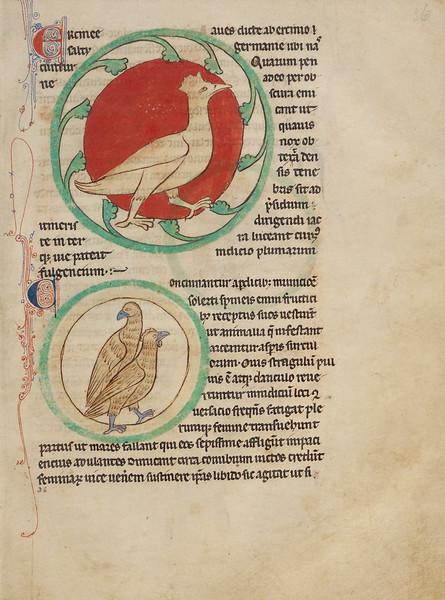 A Hercinia; Partridges