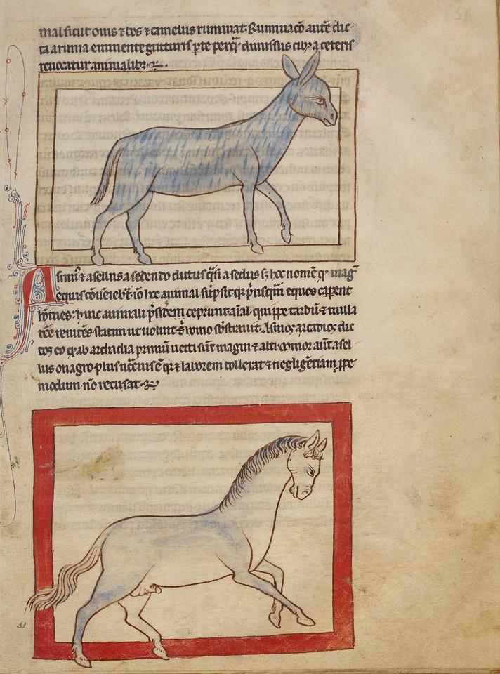 A Donkey; A Horse