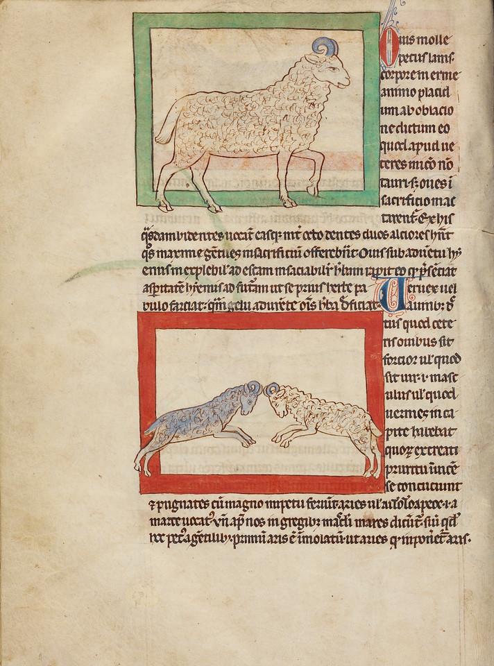 A Sheep; A Ram