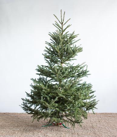 Christmas Tree Fundamentals