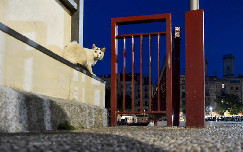 Yikes! another cat. Should Elliott slowly retreat or make a dash for under the gate?