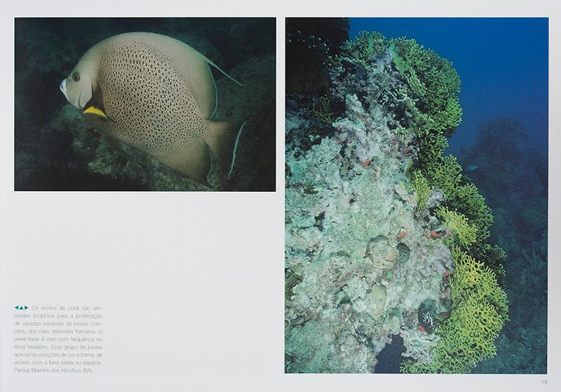 Fish life / Peixes