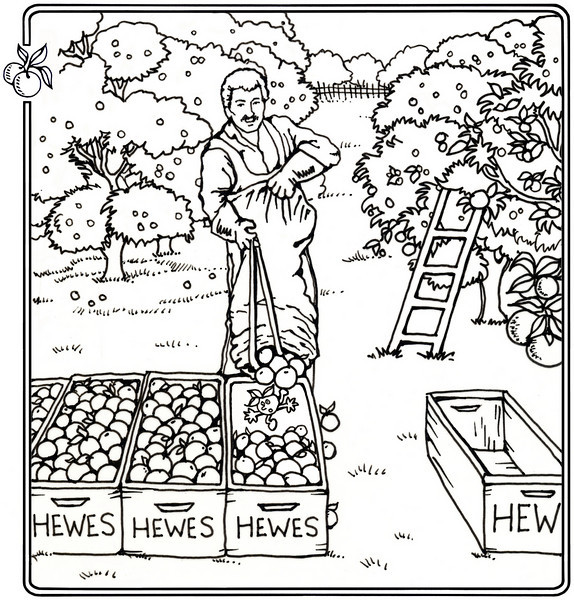 P. 16 Art<br /> Hewes packing House, El Modena<br /> Orange County's Colorful Past Coloring Book<br /> Commissioned by the Orange County Archives<br /> By Laura Hoffman<br /> <br /> Used by permission from the Orange County Archives