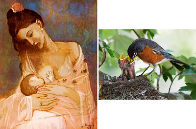 "9. Pablo Picasso – Mother and Infant Artist: 	Pablo Picaso (Spanish, 1881-1973) 	Title: Mother and Infant (1905) 	Ownership: Private Collection – Paris 	Media: Gouache 	Photo Copyright: Estate of Pablo Picasso/Artists Rights Society (ARS), New York 10. American Robin  	Turdus migratorius 	Size: L 10""     WS 17""     WT 2.7 oz 	Location (date): Texas (May) 	Media: Digital Photograph 	Photo Copyright: Richard Stade (2009)"