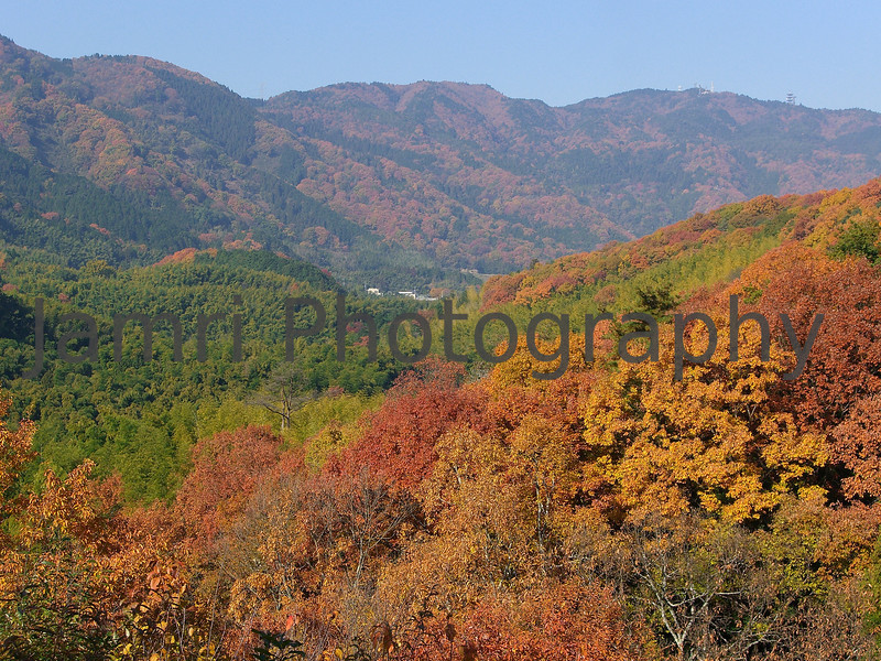 December - Colourful Foliage in the Mountains.<br /> These trees change after the Maples, so around here it's in the first week of December. I'm not sure what kind of trees they are, maybe someone can enlighten me before I publish the book?