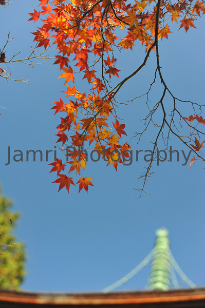 November - Waning Maple Leaves and Temple Roof.