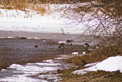 Wildlife in Stepping Stone Falls in Flint Michigan Photograph 8