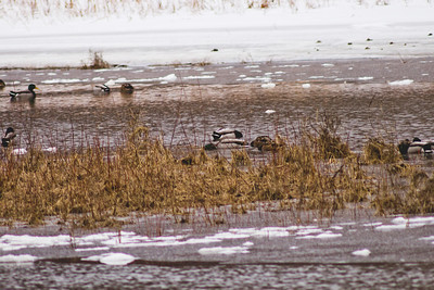 Wildlife in Stepping Stone Falls in Flint Michigan Photograph 12