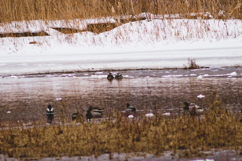 Wildlife in Stepping Stone Falls in Flint Michigan Photograph 17