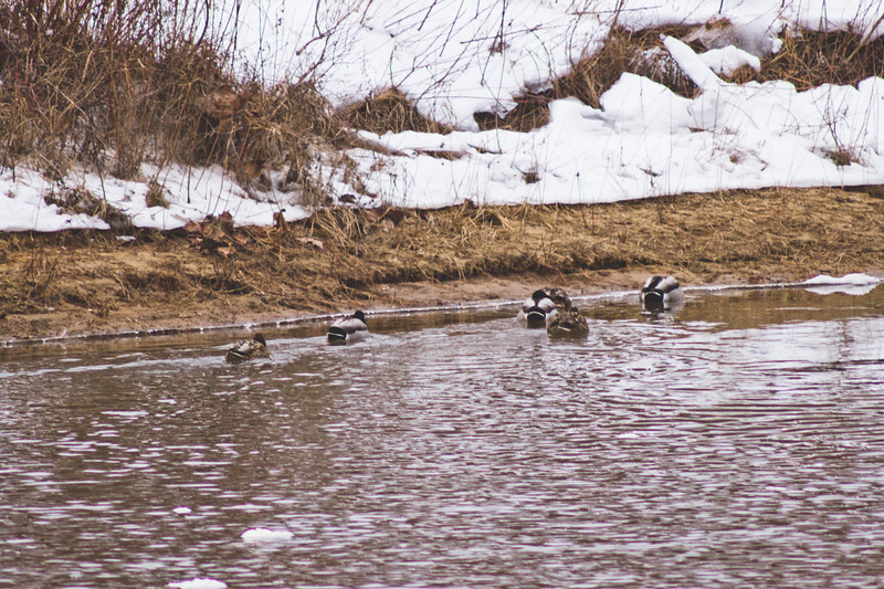 Wildlife in Stepping Stone Falls in Flint Michigan Photograph 23
