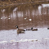 Wildlife in Stepping Stone Falls in Flint Michigan Photograph 25