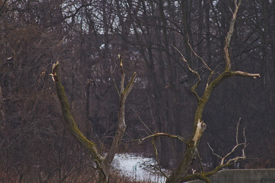 Soft Cloudy Day at Stepping Stone Falls in Flint Michigan Photograph 21