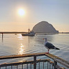 Rock and gull sunset.<br /> Dinner on the bay. California workation, Morro Bay.<br /> california-morro bay-lompoc-JTI_LPC_06sep2017. USAF-WADS