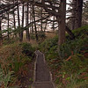 Forest trail to Second Beach. Apr2010 WA-LaPush-03apr2010-535
