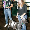 "Rod Rose The Lebanon Reporter<br /> Jacy Hill (right), who exhibited the grand champion dairy goat wether at this year's 4-H Fair, enlisted the help of friend Ethan Zimmermann in adding sparkle when she sold the animal, named ""Chacho,"" at Thursday's 4-H Fair Livestock Auction. Hill received $3,000; more coverage of the auction will be in Saturday's Lebanon Reporter."