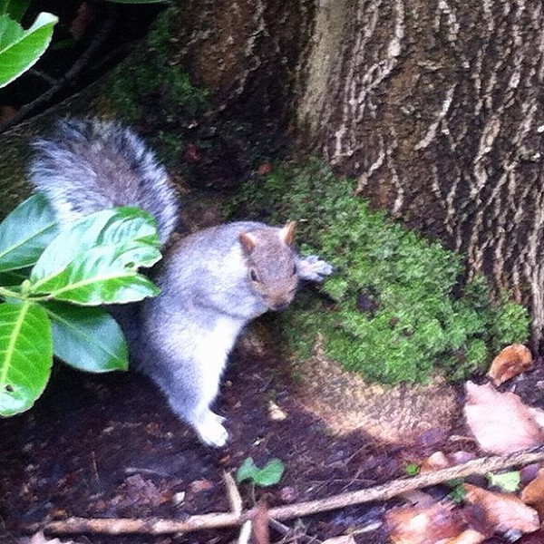 I'm sure that this #squirrel was posing for us!