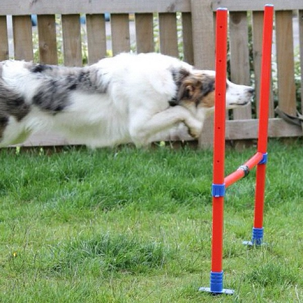 Caution - low flying #collie