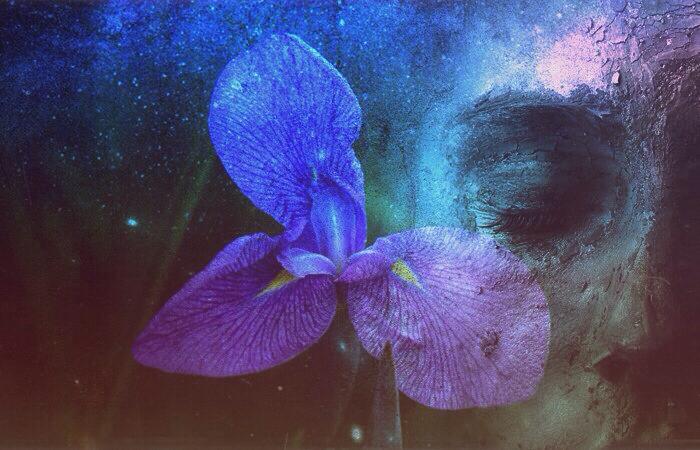 Quiet Iris